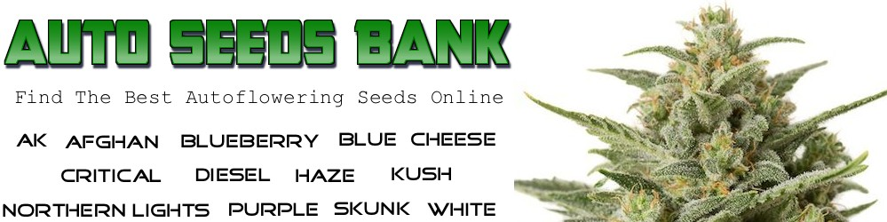 Auto Seeds Bank - Find The Worlds Best Autoflowering Seeds Online