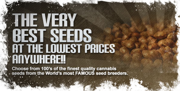 Auto Seeds Collection
