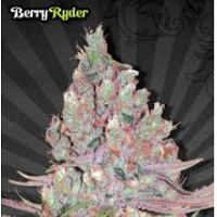 Auto Seeds - Berry Ryder