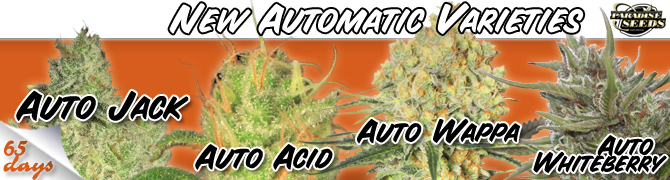 Auto Seeds Best Online Prices