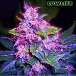 Auto Seeds - Blueberry Diesel