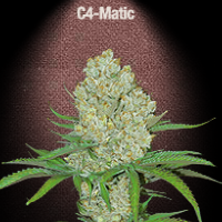 Auto Seeds - C4 Matic