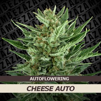 Auto Seeds - Cheese Auto Seeds