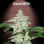 Auto Seeds - Crystal Meth