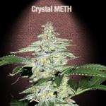 Auto Seeds - Crystal Meth