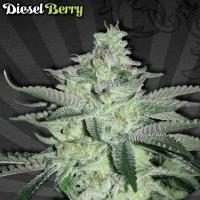 Auto Diesel Berry