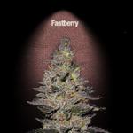 Auto Seeds - Fastberry