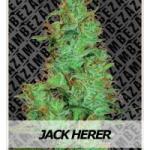 Auto Seeds - Jack Herer