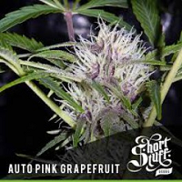 Auto Seeds - Pink Grapefruit