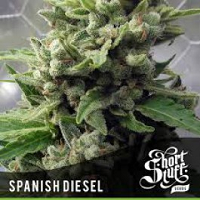 Auto Seeds - Spanish Diesel