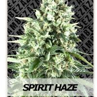 Auto Seeds - Spirit Haze