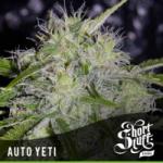 Auto Seeds - Yeti