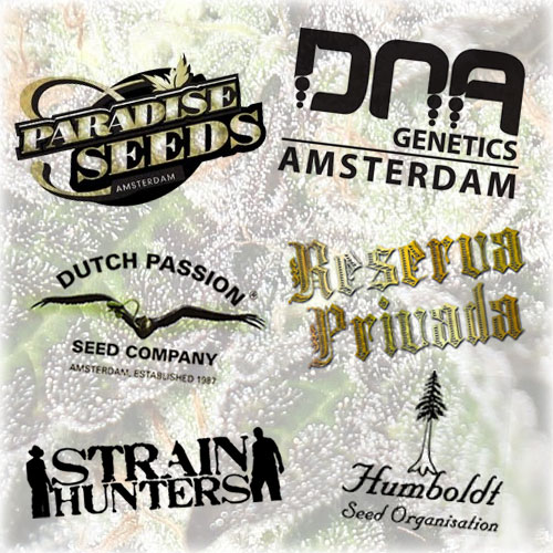 Auto Seeds FromThe Worlds Best Seed Banks