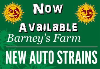 Barneys Farm Auto Seeds Now On Sale