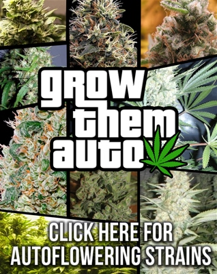 Buy Auto Seeds Online - Usa Worldwide Shipping - Free Seeds With Every Order!
