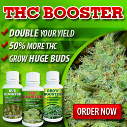 Cannabis Seeds THC Booster - Worldwide USA Shipping