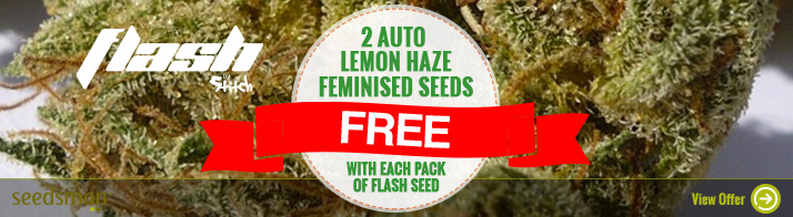 Free Auto Seeds From Flash Seeds