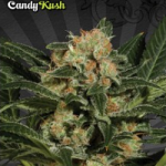 Auto Seeds - Candy Crush