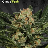 Auto Seeds - Candy Crush