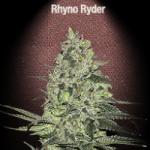 Auto Seeds - Rhyno Ryder