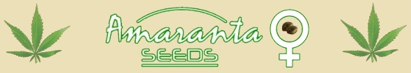 Amaranta Seeds Bank