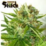 Auto Seeds - Onyx