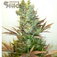 Auto Seeds - Stitches Love Potion