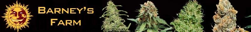 Buy Barneys Farm Seeds Online