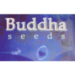 Buddha Seeds Bulk Autoflowering Seeds Collection