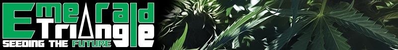 Buy Emerald Triangle Seeds Online
