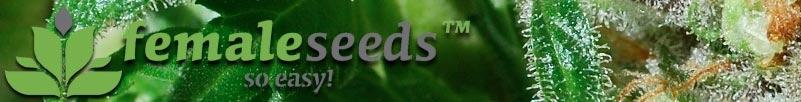 Buy Female Seeds Online