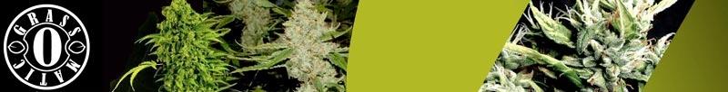 Buy Grass-O-Matic Seeds Online