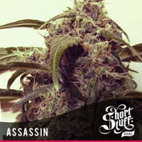 Auto Seeds - Assassin