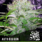 Auto Seeds - Big Gun