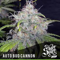 Auto Seeds - Bud Cannon