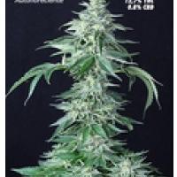 Auto Seeds - Custom X