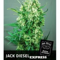 Auto Seeds - Jack Diesel Express