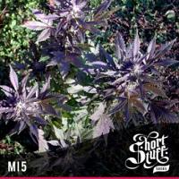 Auto Seeds - MI5