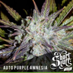 Auto Seeds - Purple Amnesia