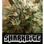 Auto Seeds - Sharkbite