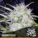 Auto Seeds Snowryder