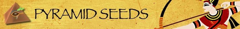 Buy Pyramid seeds Online