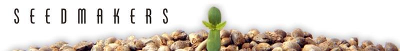 Buy Seedmakers Seeds Online