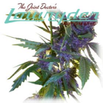 Joint Doctor Lowryder Mixed Auto Seeds Pack