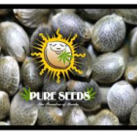 Pure Seeds Collection 3