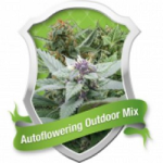 Royal Queen Seeds Autoflowering Mix
