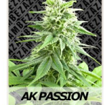 Auto Seeds - AK Passion