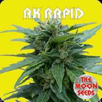 Auto Seeds - AK Rapid
