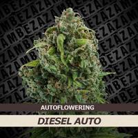 Auto Seeds - Diesel