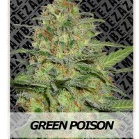 Auto Seeds - Green Poison